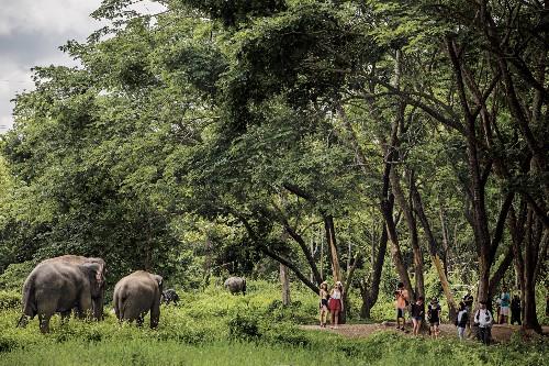 How to do wildlife tourism right