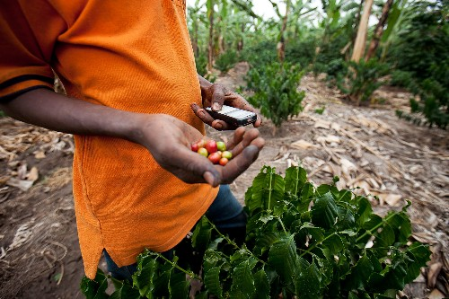 How Cell Phones Can Help End World Hunger