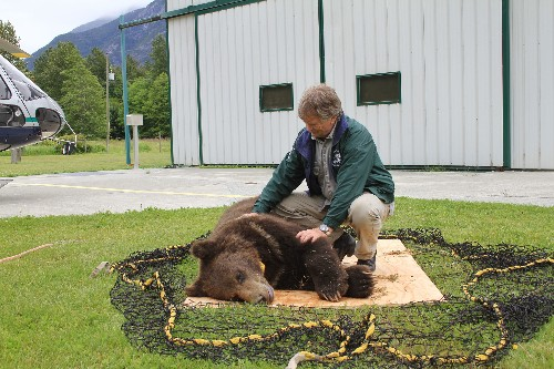 What Happens to Problem Bears That Go to Rehab?