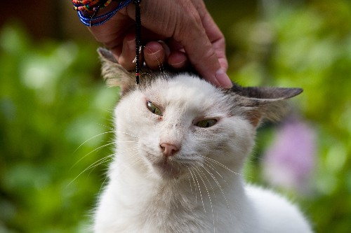 Does Petting Really Stress Out Your Cat?
