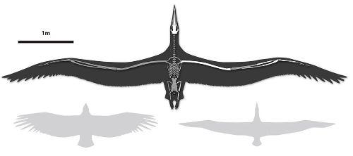Biggest Flying Seabird Had 21-Foot Wingspan, Scientists Say