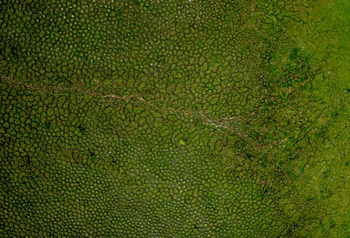 Mysterious Mounds in South America Are Likely Worm Poop