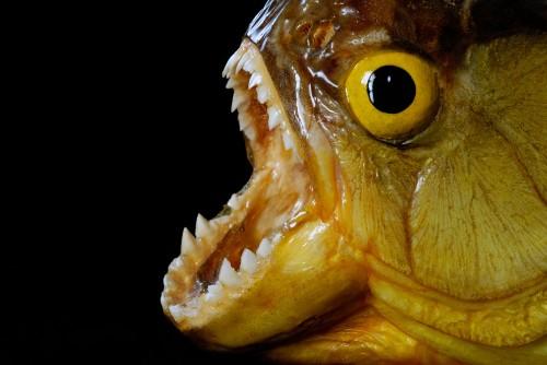 13 Scariest Freshwater Animals
