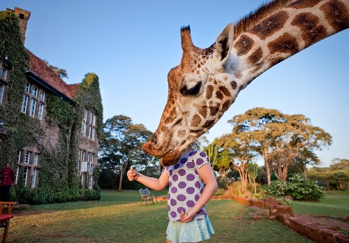 14 Photos of Giraffes With Their Heads In the Clouds