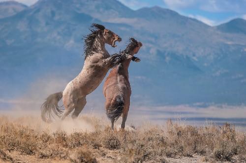 Wild Horses, Wilder Controversy