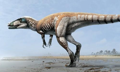 "Paleo Profile: ""Lightning Claw"""