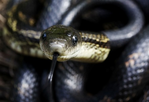 Snakes Infest House in Maryland—How Did It Happen?