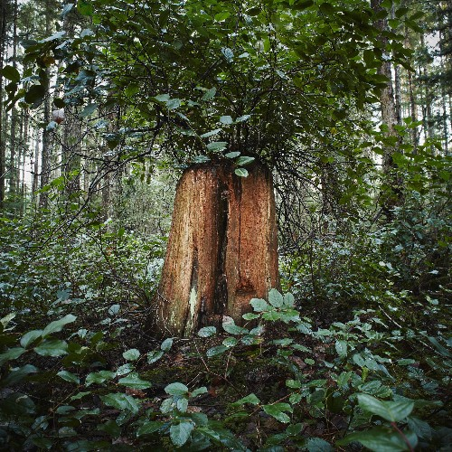 Seeing the Trees Through the Forest: Vestiges of Ancient Woods