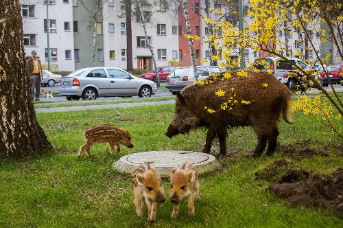 Feral Cities: How Animals are Going Urban Like Never Before