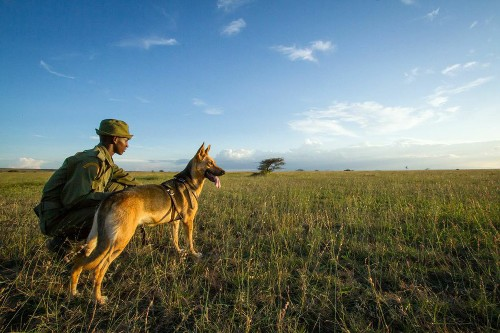 In Africa, Tracker Dogs Join War Against Elephant Poachers