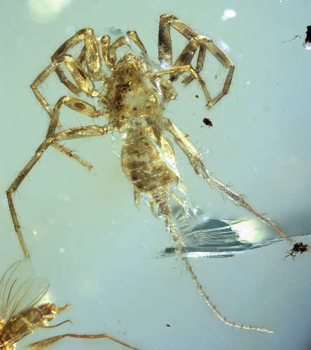Why This Ancient Spider Had a Tail