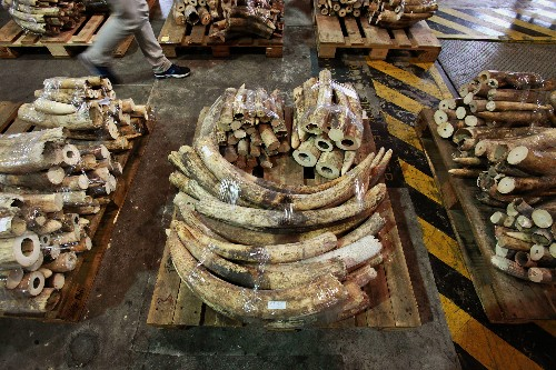 Hong Kong Announces World's Biggest Ivory Burn