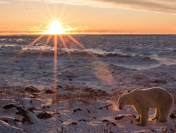 Walking With Giants: Journey Through Polar Bear Country