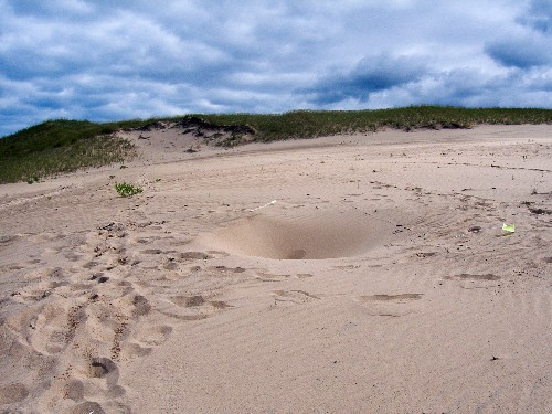 Scientists Explain Mystery Behind Sand Dune That Swallowed Boy