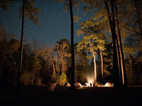 Florida's Pristine Parks: Apalachicola National Forest