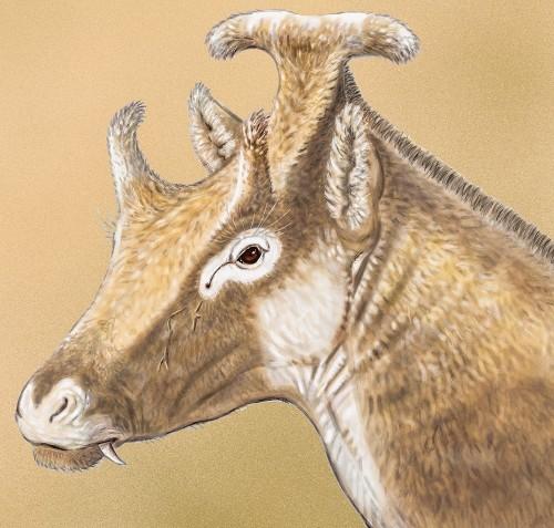 Paleo Profile: Amidala's Strange Horn