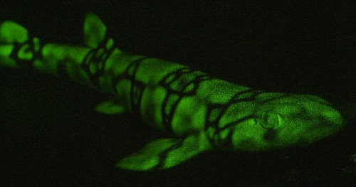 Living Fireworks, These Animals Produce Light Shows with Their Bodies
