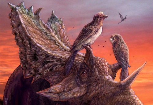 Stunningly complete fossil bird among largest in North America