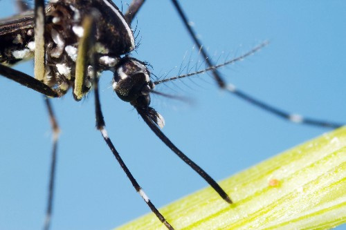 Zika Virus: A New Threat and a New Kind of Pandemic