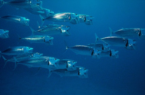 Value of the High Seas for Life on Earth Highlighted in New Report