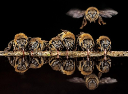 Photos from inside a tree reveal intimate lives of wild honeybees