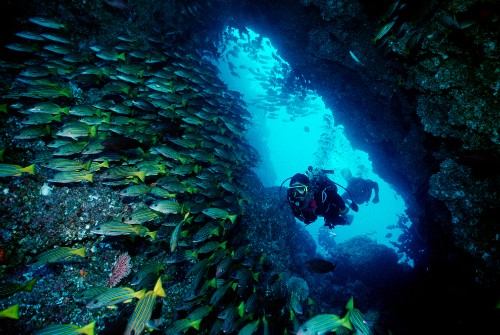 Must-Do Trip: Dive Cocos Island, Costa Rica