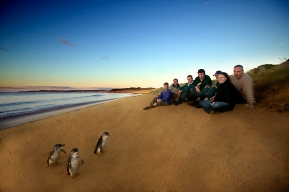 Make Way for the Penguin Parade