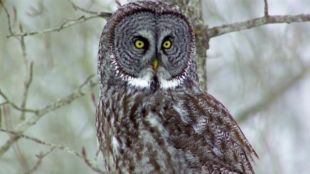 Owls explained: These master hunters use their extraordinary senses to rule the roost