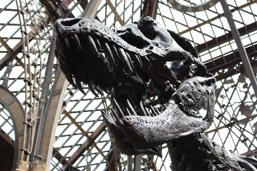 Dinosaur Physiology Debate Continues to Simmer