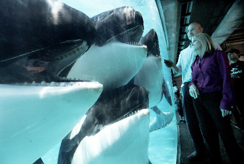 Opinion: SeaWorld vs. the Whale That Killed Its Trainer