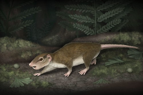 Fossil Reveals Long-Lived Mammal Group's Secret