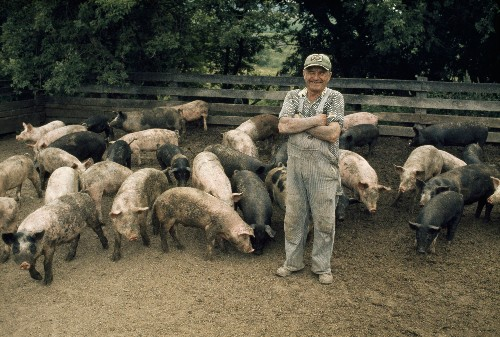 Our Swine, Ourselves: 'Pig Tales' About How We Treat 'Lesser Beasts'