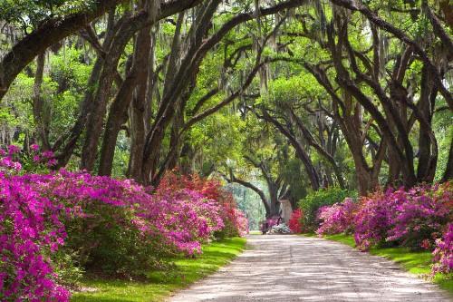 Your Louisiana Photos