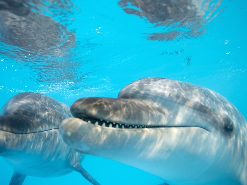 Florida by Water: Watch Wild Dolphins