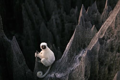 10 unforgettable animal-watching adventures