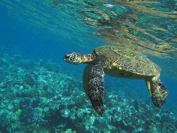 Just Back: Maui