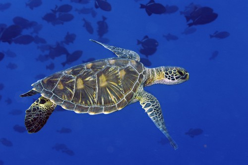 The UN Starts a Conservation Treaty for the High Seas