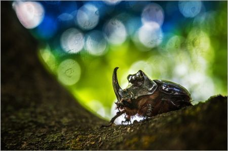 My Little Rhino Photo by Gabor Dvornik — National Geographic Your Shot