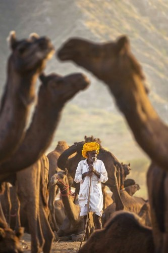 My Camel My Shield Photo by Sabbyy Sg — National Geographic Your Shot