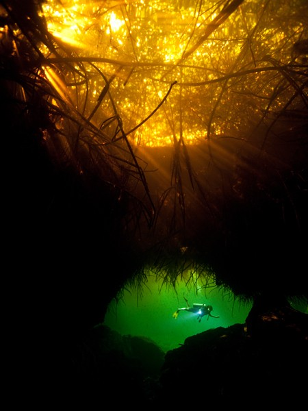 Must-Do Trip: Dive Caves in the Yucatán