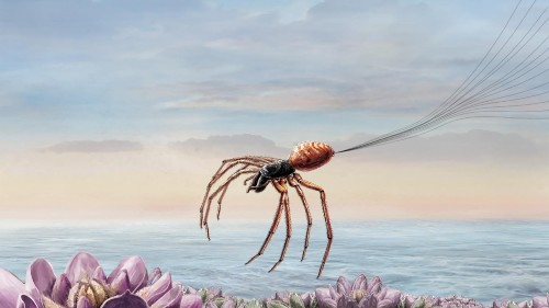 See how spiders 'fly' for hundreds of miles
