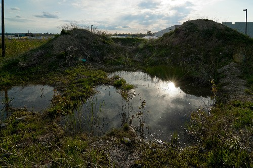 In Bankrupt Detroit, Nature Reclaims Debris Mounds on Vacant Land