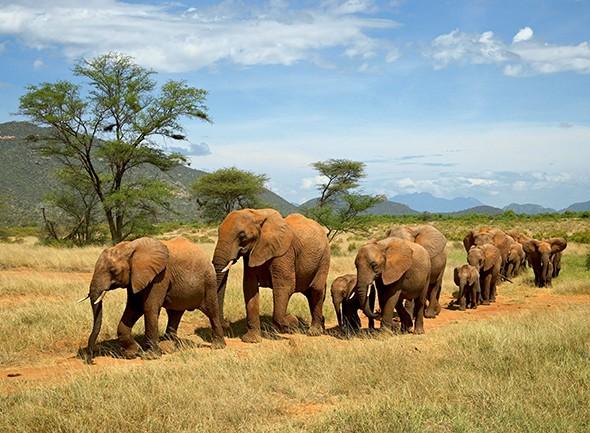 A Snapshot of Samburu