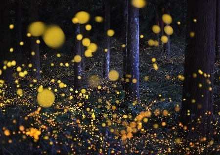 The Galaxy in woods Photo by Nori Yuasa — National Geographic Your Shot