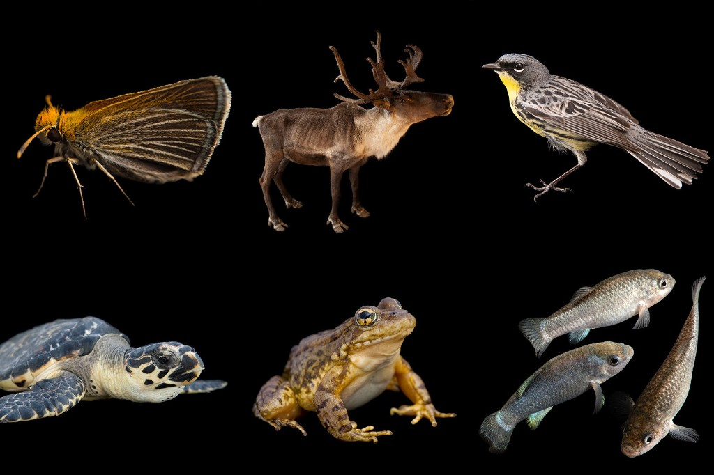 See a different endangered animal in every U.S. state