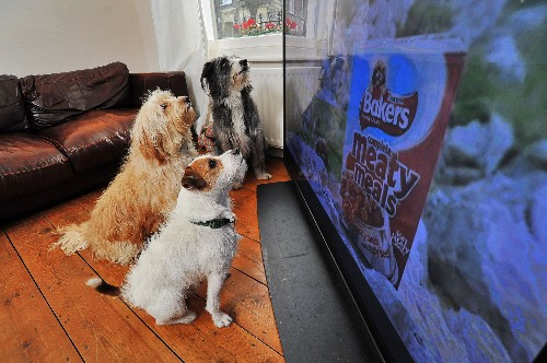 Why Do Dogs Watch—and React to—TV?