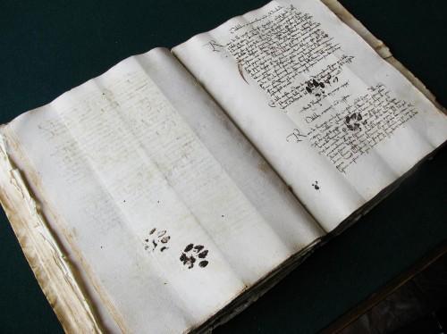 Curious Cat Walks Over Medieval Manuscript