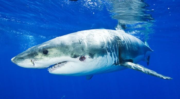 Shark Week - Magazine cover