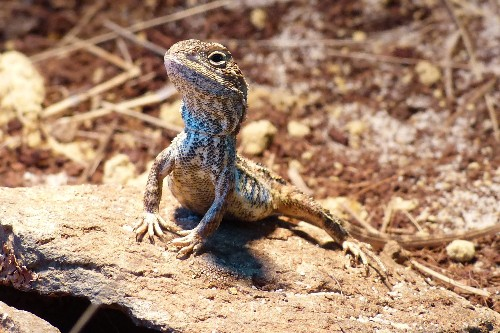 New 'dragon' species may already be extinct