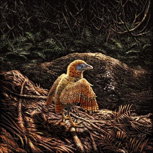 Prehistoric birds were born ready to run, fossil shows